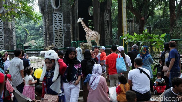 Bergeser ke Jakarta Selatan, ada Kebun Binatang Ragunan. Kenalkanlah sejumlah binatang yang ada di sana untuk wisata edukasi. Sekalian jalan sehat bareng si buah hati. (Lamhot Aritonang/detikcom)