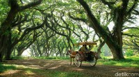 Banyuwangi Ancang-ancang Sambut Wisata Saat New Normal