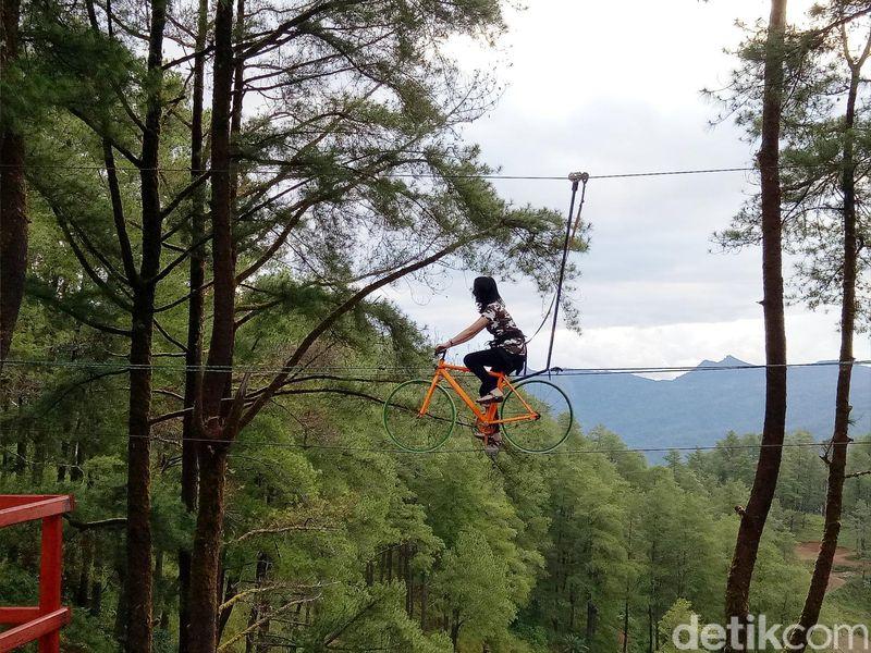 Berada di Kecamatan Tinggimoncong, Kabupaten Gowa, Sulawesi Selatan, ada Hutan Pinus Malino yang amat menawan. Apalagi ada wahana Sepeda Terbang yang cukup menantang. (Ibnu Munsir/detikcom)