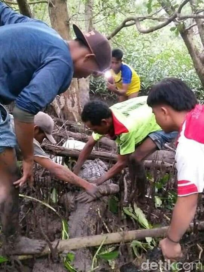 Kegembiraan warga dalam perayaan Hari Raya Idul Fitri tak kalah menarik dengan adanya penangkapan buaya di Perairan Molong dekat dengan Pantai Batu Pampang, Desa Emang Lestari, Kecamatan Lunyuk (Harianto/detikcom)