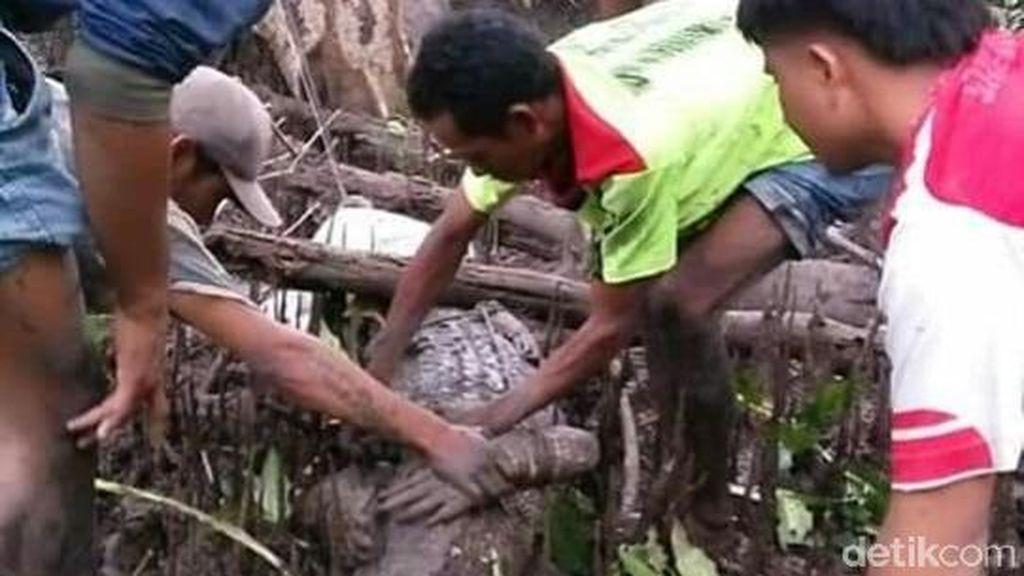 Ketika Buaya Muara Jadi Destinasi Wisata di Sumbawa