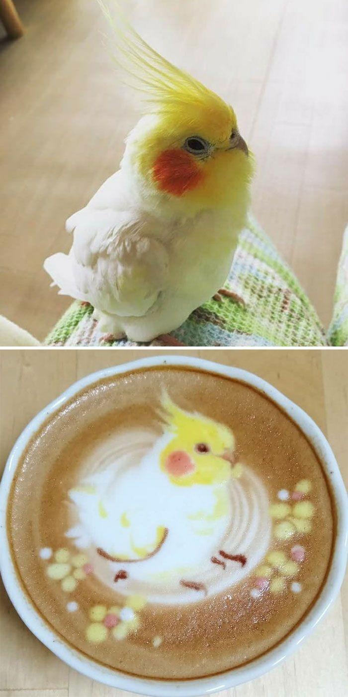 Mencintai burung dan latte art, Ku-san membuat kreasi latte art burung keren. Ia memamerkannya lewat akun Isntagram kunit92. Foto: Instagram kunit92