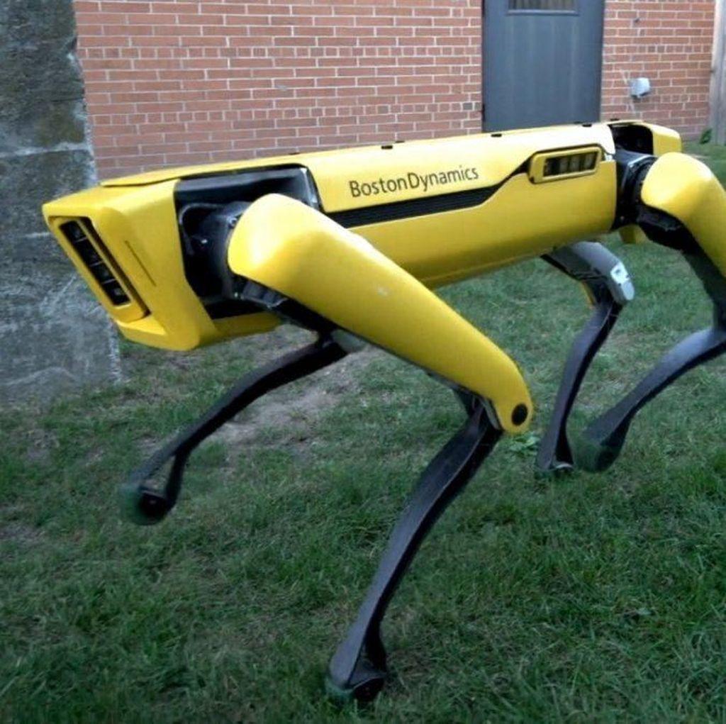 Ketika Robot Anjing Boston Dynamics Dipakai Narik Becak