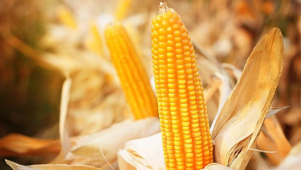 Data Ekspor Produk Pertanian Naik, Apa Pemicunya?
