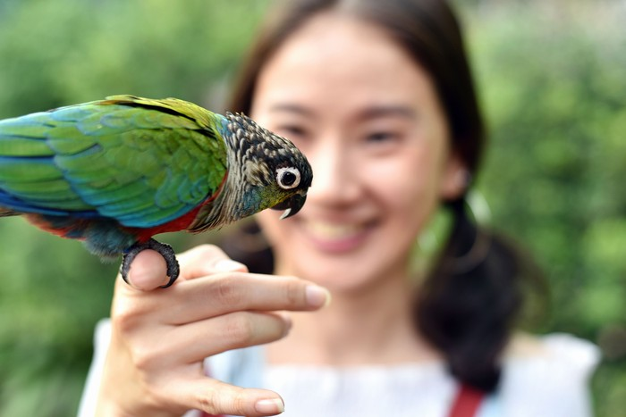 Environment human and nature concept, Parrot bird on young girl hand, Smiling woman playing with her bird pet.