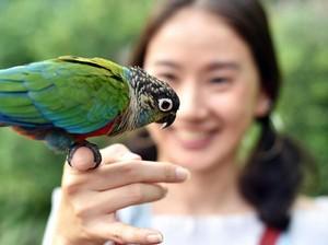 Mantan Perawat Jualan Popok Burung, Penghasilannya Rp 62 Juta Sebulan