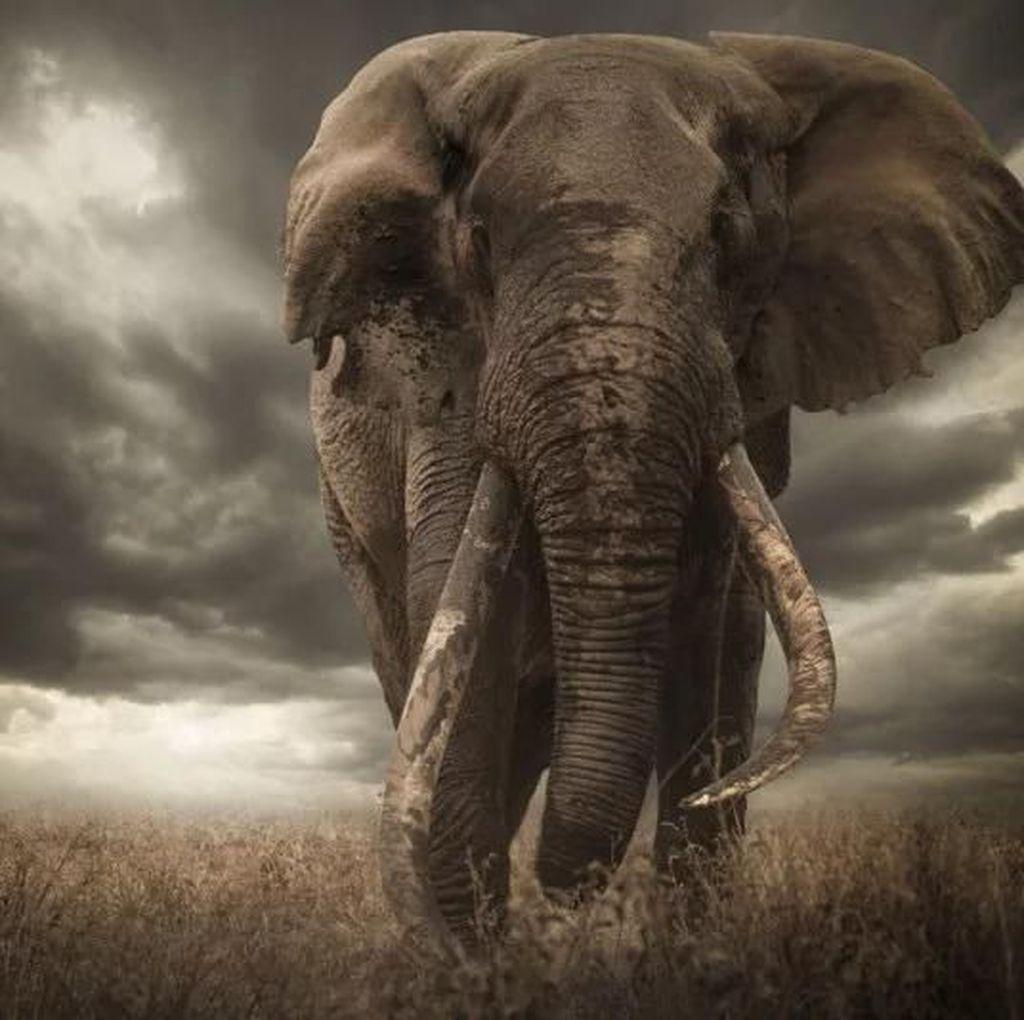 Gara-gara Telinga, Juara Foto Wildlife Ini Kena Diskualifikasi