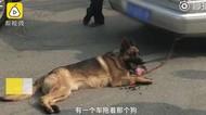 Tega, Pengemudi Ini Seret Anjing di Belakang Mobil