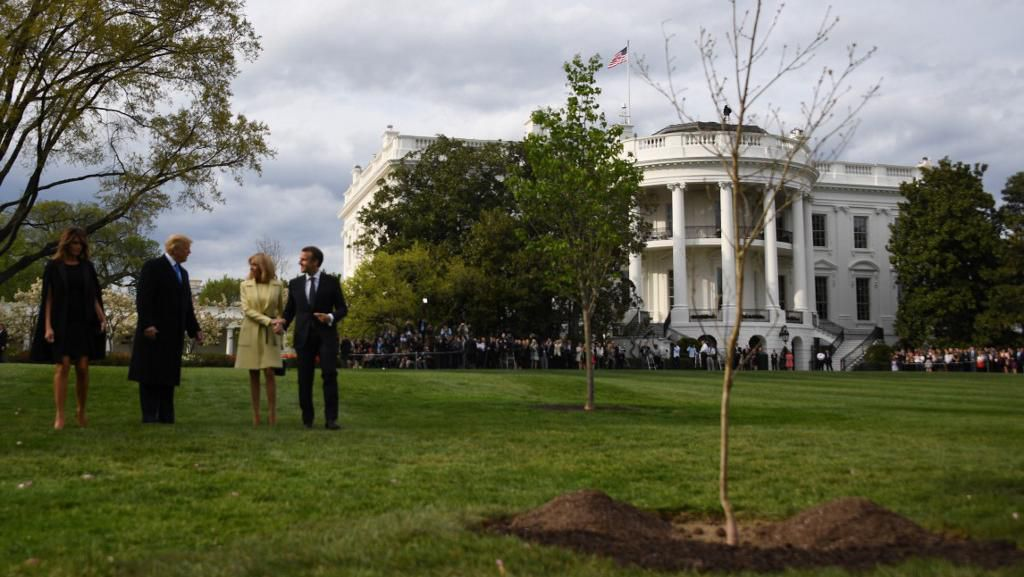 Momen Penanaman Pohon Persahabatan Trump-Macron yang Kini Mati