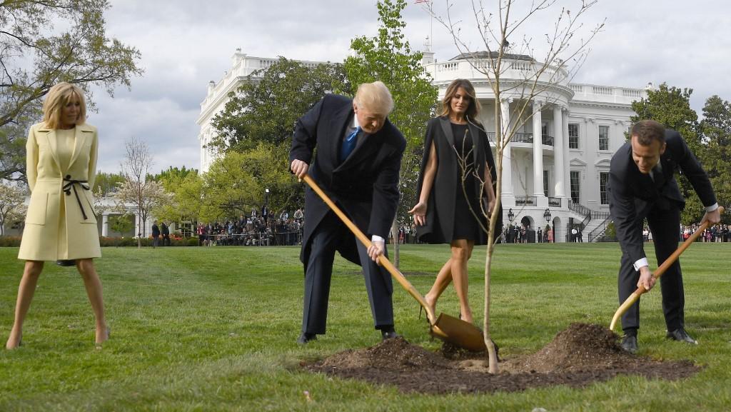 Pohon Persahabatan Trump dan Macron yang Ditanam di Gedung Putih Mati