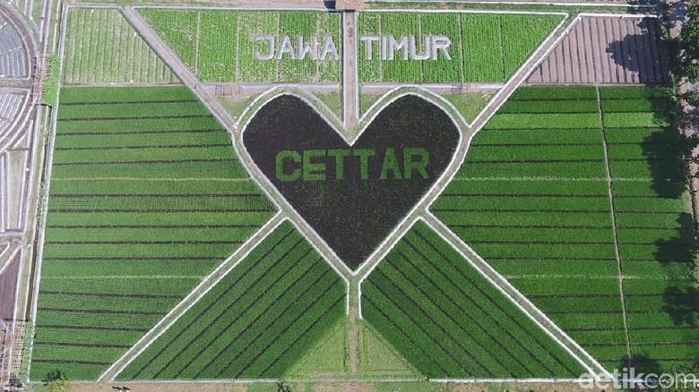 Crop Circle di Kediri (Andhika/detikcom)