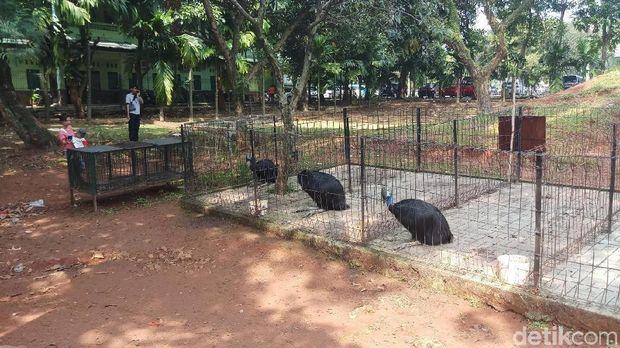 Mini Zoo Kostrad yang Viral karena Kotor Kini Sudah Dibersihkan