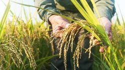 Perjuangan Petani Mencegah Rugi-Melawan Sengsara di Tengah Corona