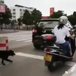 Ada Lagi Pengemudi Mobil Seret Anjing karena Tak Tahan Baunya