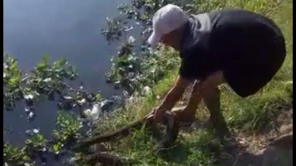 Aksi Ajat Tangkap Ular Sanca 3 Meter Gegerkan Warga Padalarang