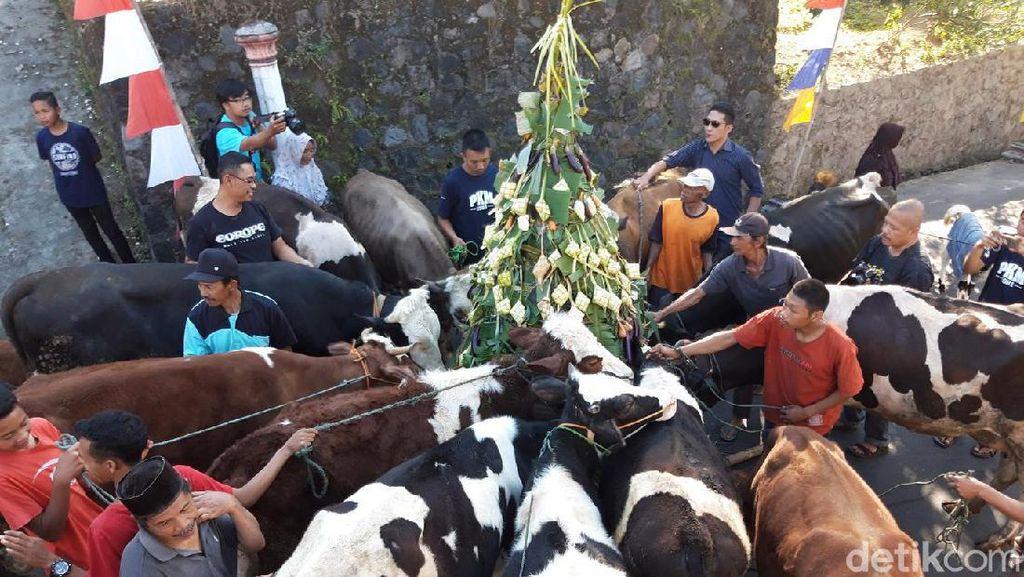 Rayakan Syawalan, Ratusan Sapi Turun ke Jalan Diarak Warga di Boyolali
