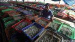 Serba-serbi Proses Pengolahan Ikan Asin di Utara Jakarta
