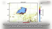 Polynya di Laut Weddell, Antartika (Screenshot CNN)