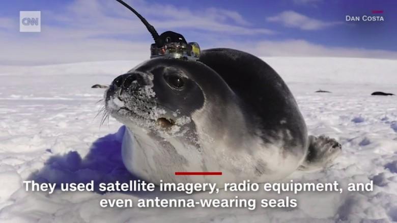 Anjing laut yang membantu peneliti di Antartika (Screenshot CNN)