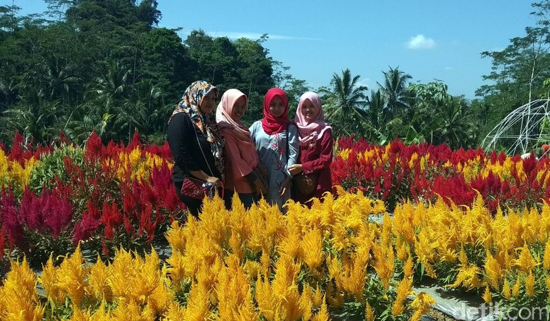 Inilah destinasi baru untuk dikunjungi wisatawan kalau liburan ke Magelang. Namanya, Taman Bunga Pagoda. Cantik lho! (Eko Susanto/detikcom)