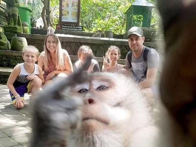 Turis Mau Foto, Ada Monyet Lewat Kasih Jari Tengah
