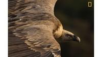 Tamara Blazquez Haik juara 1 kategori Nature untuk fotonya, berjudul Tender Eyes. Ini foto burung nasar atau burung bangkai yang mengelilingi langit di Taman Nasional Monfrague Spanyol (Tamara Blazquez Haik/National Geographic/CNN)