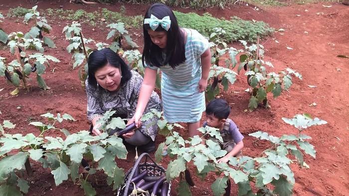 Istri dari Susilo Bambang Yudhoyono ini sudah lama senang berkebun. Pada 2015 bahkan ia memiliki kebun sayuran yang diberi nama Cikeas Jungle. Foto: instagram Ani Yudhoyono/annisa yudhoyono