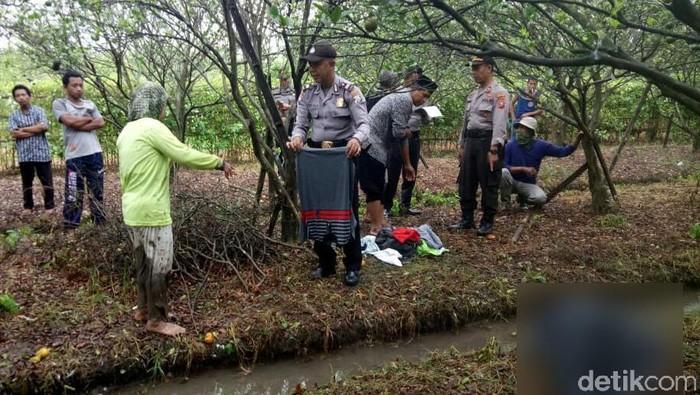 Pemudik asal Banyuwangi tewas di kebun jeruk/Foto: Ardian Fanani