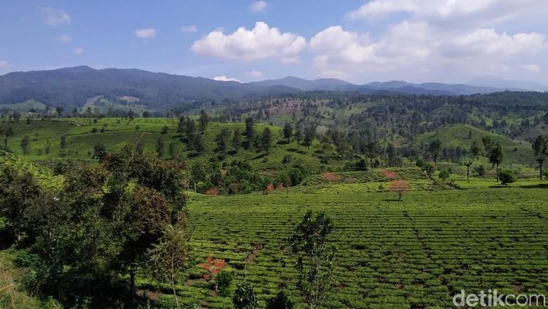 Bukit Indah Gembung di Kabupaten Bandung (Wisma Putra/detikcom)