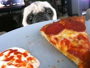 Gemas Banget! Pose Anjing Imut Saat Minta Makanan Ini Bikin Ngakak