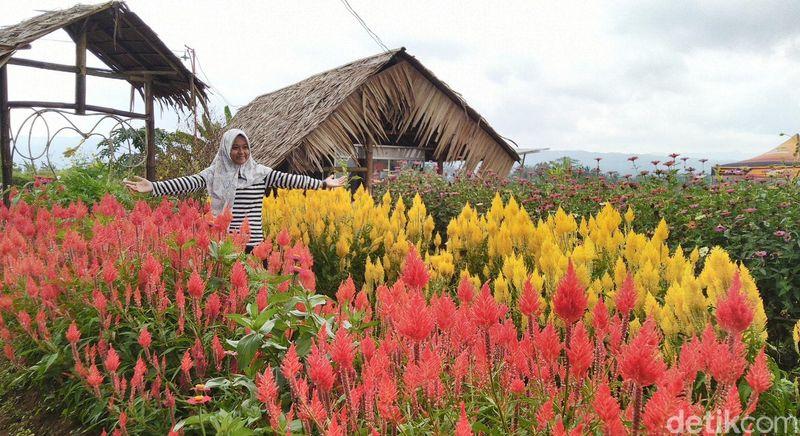 Ada destinasi baru di Ciamis buat liburan akhir pekan, namanya Ekowisata Kampoeng Sawah. Traveler bisa foto-foto sampai puas di taman bunga cantik ini. (Dadang Hermansyah/detikcom)