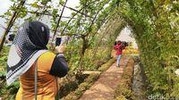 Destinasi Wisata Di Ciamis Terbaru 2019