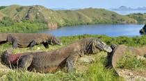 5 Hal Tentang Pulau Komodo yang Harus Diketahui
