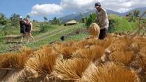Pariwisata Diguncang Corona, Bali Genjot Ekspor Hasil Pertanian