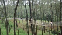 Weekend Ini, Mampir ke Hutan Paling Instagramable di Lembang