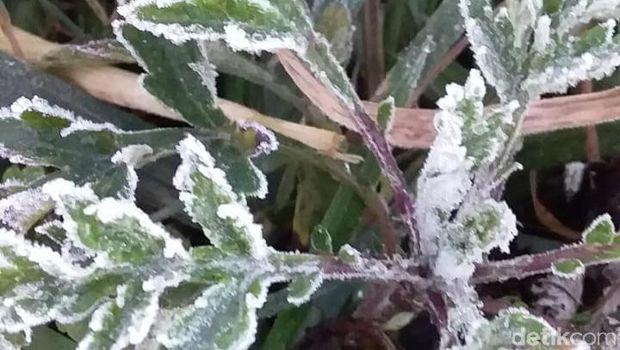 Embun es muncul saat suhu mencapai minus satu derajat di Dieng pagi tadi, Senin (17/6).