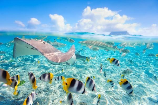 Lautnya yang tenang dan berair jernih, juga kaya akan kehidupan laut menjadikan Bora-bora sebagai pulau cantik yang ramai dikunjungi. (iStock)
