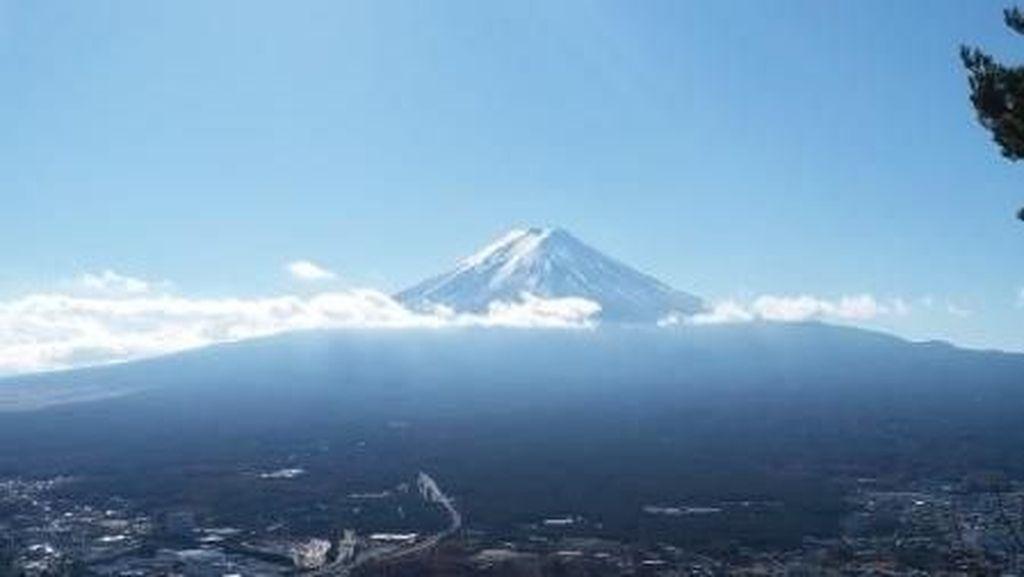 Cerita Dendam Kelinci Terhadap Rakun dari Jepang