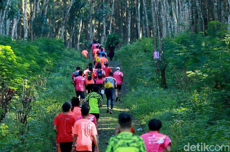 Banyuwangi kembali menggelar event sports tourism bagi pelajar. Mereka akan berlari menyusuri kawasan Gombengsari yang terkenal dengan perkebunan kopinya. (Ardian Fanani/detikcom)