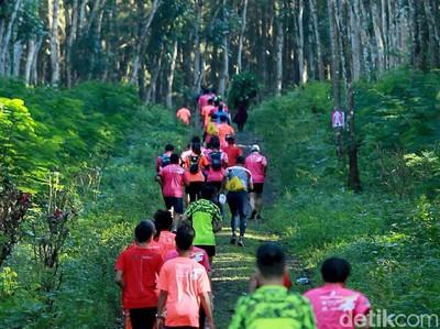 Yang Baru di Banyuwangi, Lomba Lari Berkeliling Kebun Kopi