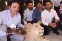 Tampar Muka Singa Pakai Kue Ulang Tahun, Pria Ini Dikritik Pedas