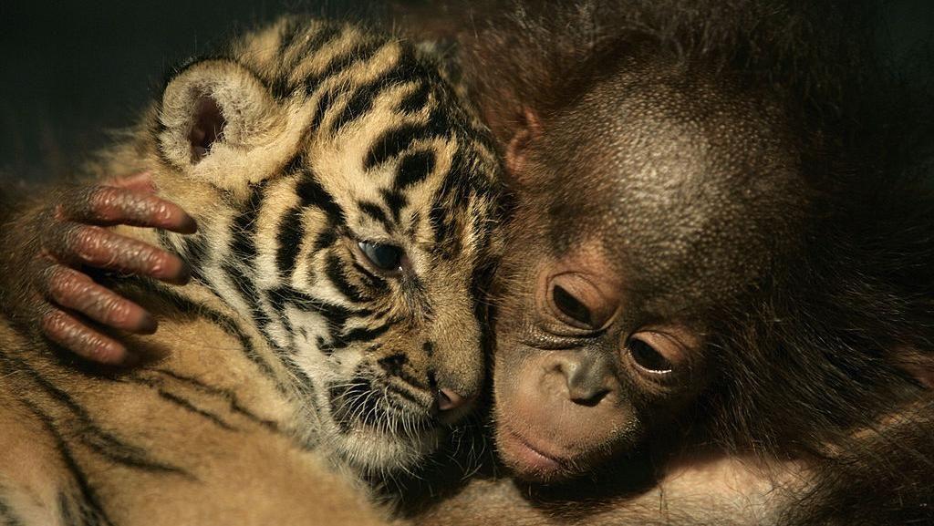 Ragam Cara Menggemaskan Hewan Saat Tunjukkan Kasih Sayang