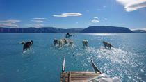 Lautan Es Greenland Meleleh Tak Lazim, Peneliti Ingatkan Dampaknya ke Dunia