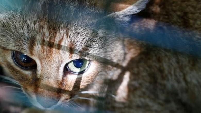 Download 93+  Gambar Kucing Sedih Minta Makan Terlihat Keren