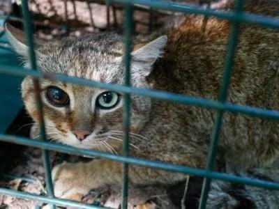 Makhluk Mitos Ditemukan di Pulau Wisata Mewah Ini