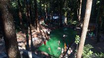 Semarang Punya Kolam Renang di Tengah Hutan Pinus