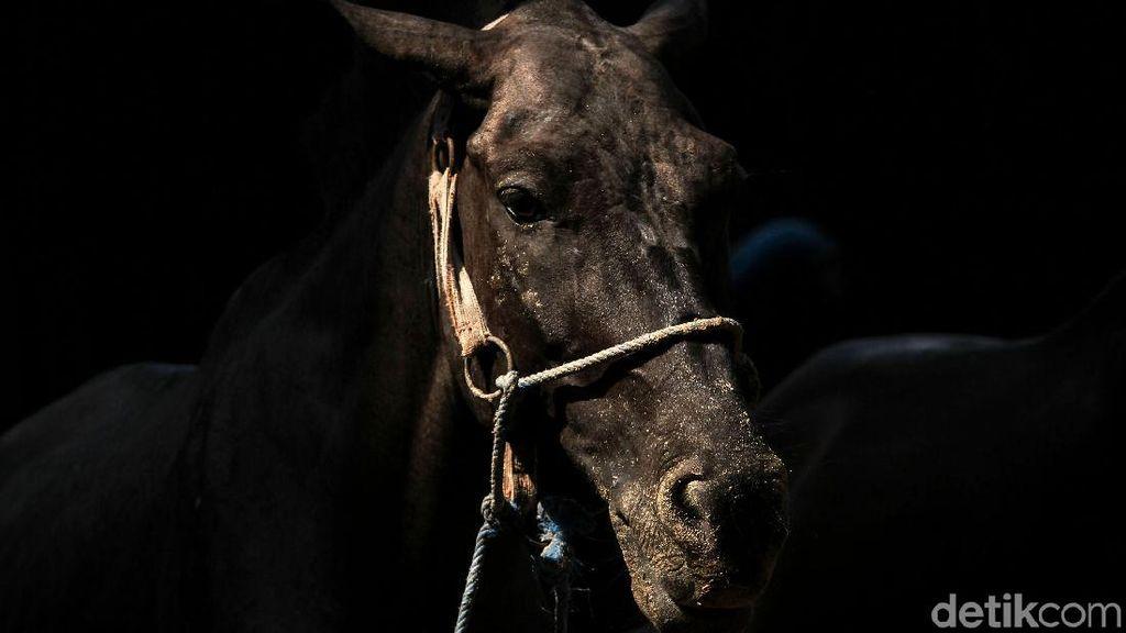 Merawat Kuda Wisata Ibu Kota