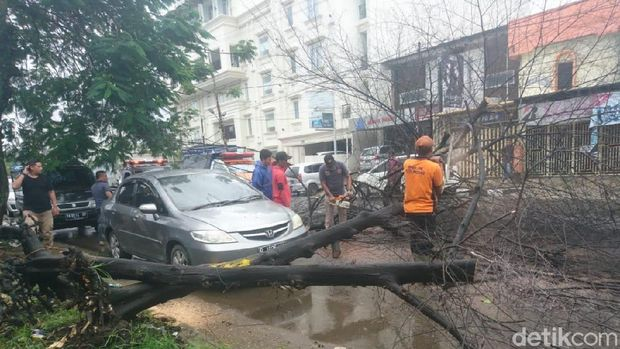 Pohon tumbang di Padang, Sumbar, Sabtu (22/6/2019)
