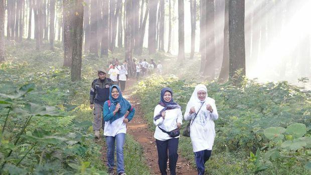 Telusuri Hutan, Ribuan Pelari Ikuti Banyuwangi Gombengsari Plantation Run 2019