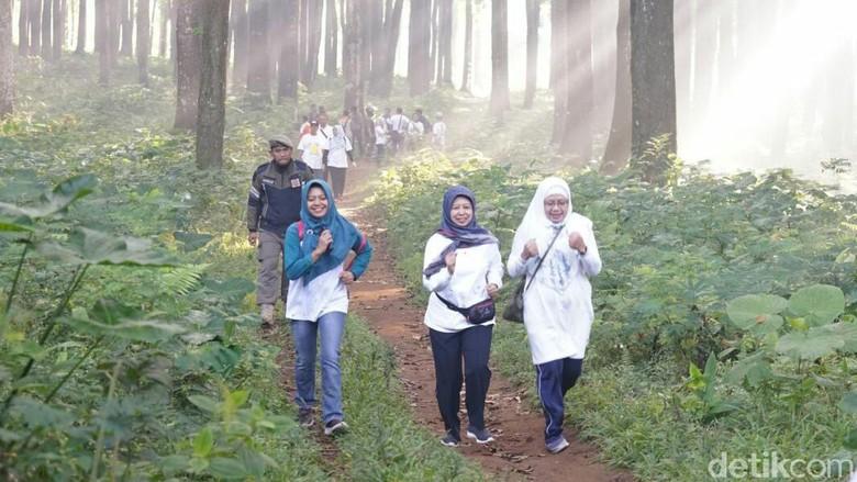 Perhelatan Banyuwangi Gombengsari Plantation Run 2019 (Ardian/detikcom)